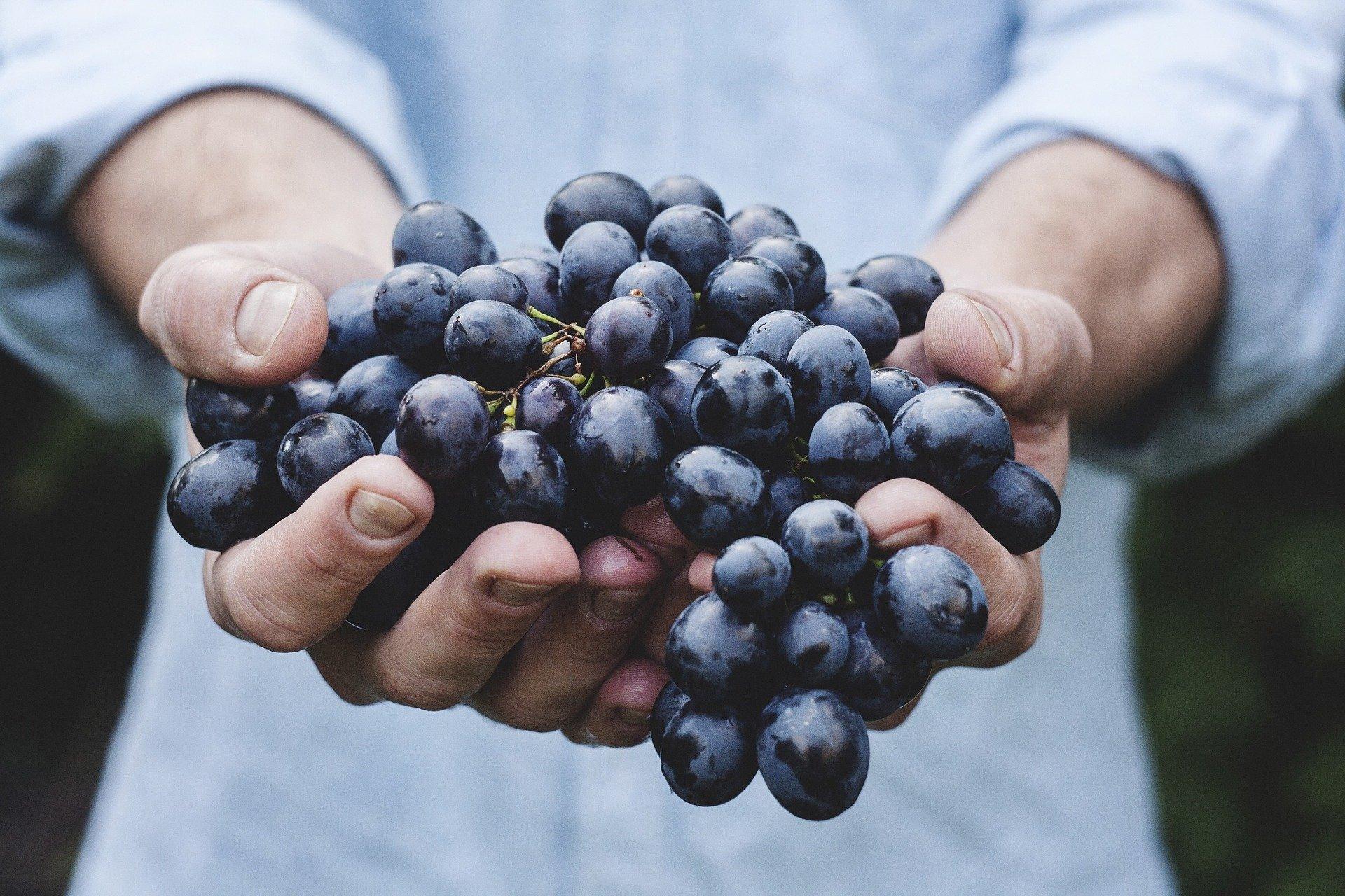 consumo de vino EAE